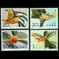 1995-6 桂花