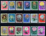 特44菊花鉴赏